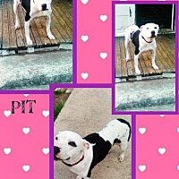 Adopt A Pet :: Diamond - Bogalusa, LA