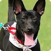Adopt A Pet :: Hana - San Mateo, CA