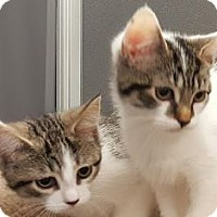 Adopt A Pet :: MaddieMae -Special Needs - Walworth, NY