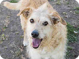 Terrier (Unknown Type, Medium) Mix Dog for adoption in Agoura, California - Izzy