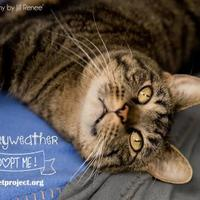 Adopt A Pet :: Merryweather - Kansas City, MO