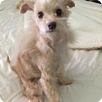 Adopt A Pet :: Harris - Santa Fe, TX