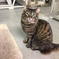 Adopt A Pet :: Kulli - Mission, BC