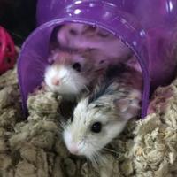 Adopt A Pet :: Fritz - Oak Park, IL