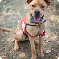 Adopt A Pet :: Tyler ~cross posted - Southbury, CT