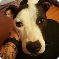 Adopt A Pet :: Styx - Pensacola, FL