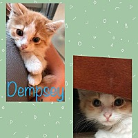 Adopt A Pet :: Dempsey - Wichita, KS