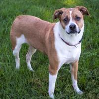 Adopt A Pet :: Fiona - Fairfax, VA