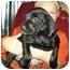Photo 1 - Boston Terrier/Dachshund Mix Puppy for adoption in Flint, Michigan - Merri