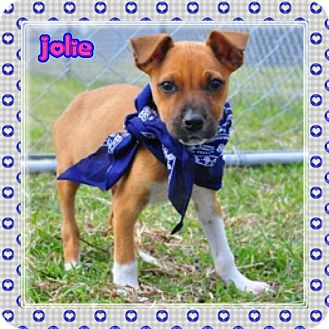 Boxer Mix Puppy for adoption in Corpus Christi, Texas - Jolie