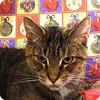 Adopt A Pet :: Hello Kitty (Miss Kitty) - Albany, NY