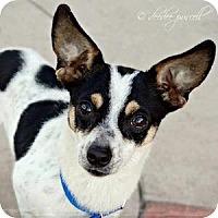 Adopt A Pet :: West - Gilbert, AZ