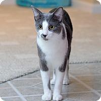 Adopt A Pet :: Peter Parker - St. Louis, MO