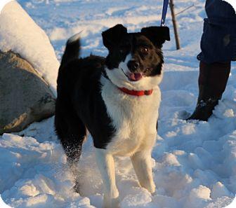 Border Collie Mix Dog for adoption in Elyria, Ohio - Murray
