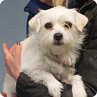 Adopt A Pet :: Annie - Mount Kisco, NY