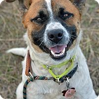 Adopt A Pet :: Taz - Wimberley, TX