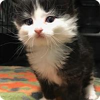Adopt A Pet :: Jarbou - Ortonville, MI