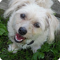 Adopt A Pet :: Rosie - Baltimore, MD