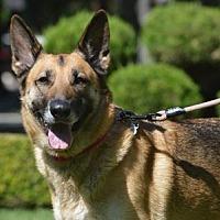 Adopt A Pet :: Yola - Mira Loma, CA