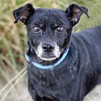 Adopt A Pet :: Ralph - Palm Springs, CA