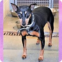 Adopt A Pet :: Whitney - San Jacinto, CA