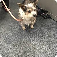 Adopt A Pet :: Alfie - Pataskala, OH