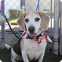 Adopt A Pet :: Hooligan - Fresno, CA