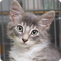 Adopt A Pet :: Duster - Alameda, CA