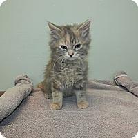 Adopt A Pet :: Jessica - Columbus, OH