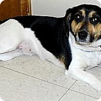 Adopt A Pet :: Rosie - Washington Court House, OH