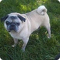 Adopt A Pet :: Chazz - Eagle, ID