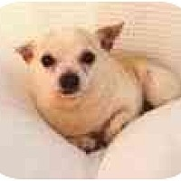 Adopt A Pet :: Freud - Pembroke Pines, FL