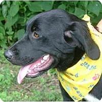 Adopt A Pet :: Brook - Glastonbury, CT