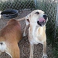 Adopt A Pet :: Isme - Wytheville, VA