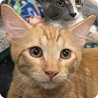 Adopt A Pet :: Oliver - Winchester, CA