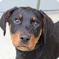 Adopt A Pet :: Zena - Washington, DC