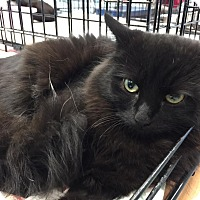 Adopt A Pet :: Kia - CLEVELAND, OH