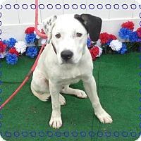 Adopt A Pet :: DALE- also see CHIP - Marietta, GA