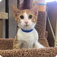 Adopt A Pet :: Leonard - Buffalo, NY