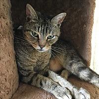 Adopt A Pet :: Brett - Chula Vista, CA