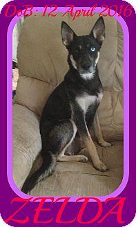 Husky/Miniature Pinscher Mix Dog for adoption in New Brunswick, New Jersey - ZELDA