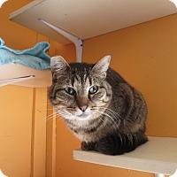 Adopt A Pet :: Benny - Coos Bay, OR