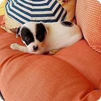 Adopt A Pet :: Annabelle - Scottsboro, AL