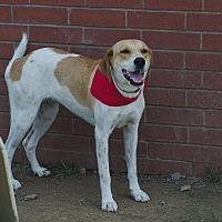 Labrador Retriever/Shepherd (Unknown Type) Mix Dog for adoption in Poteau, Oklahoma - ALEAH
