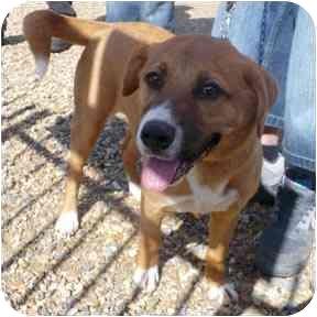 Labrador Retriever Mix Dog for adoption in Haughton, Louisiana - Bonnie