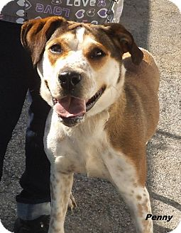 Hound (Unknown Type) Mix Dog for adoption in Middletown, New York - Penny