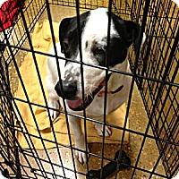 Adopt A Pet :: DAL - Silsbee, TX