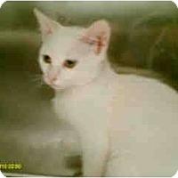 Adopt A Pet :: Willow - Mobile, AL