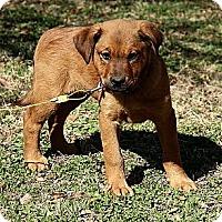 Adopt A Pet :: Kerra - Staunton, VA