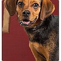 Adopt A Pet :: Sheldon - Owensboro, KY